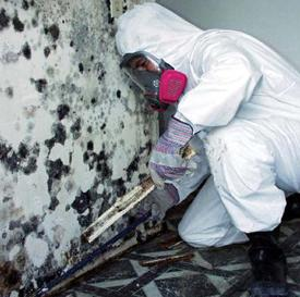 mold abatement technitian
